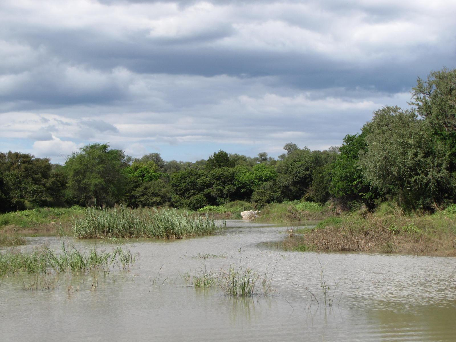Zandspruit Bush And Aero Estate property for sale. Ref No: 12795962. Picture no 10