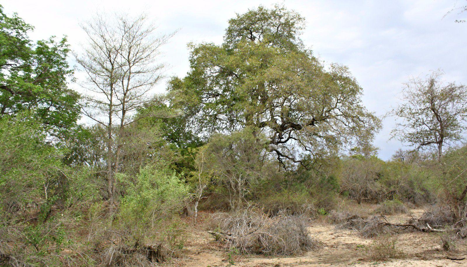 Moditlo Nature Reserve property for sale. Ref No: 2947660. Picture no 4
