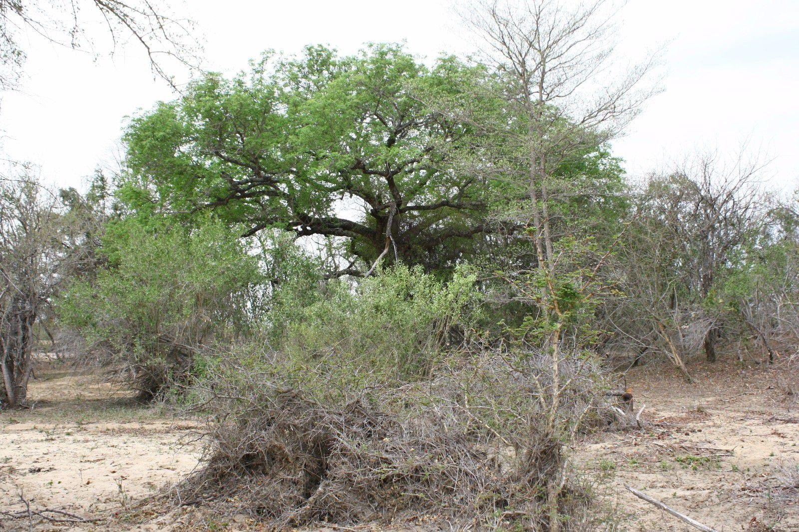 Moditlo Nature Reserve property for sale. Ref No: 2947660. Picture no 5