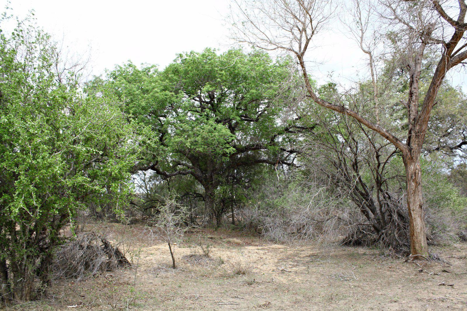 Moditlo Nature Reserve property for sale. Ref No: 2947660. Picture no 3