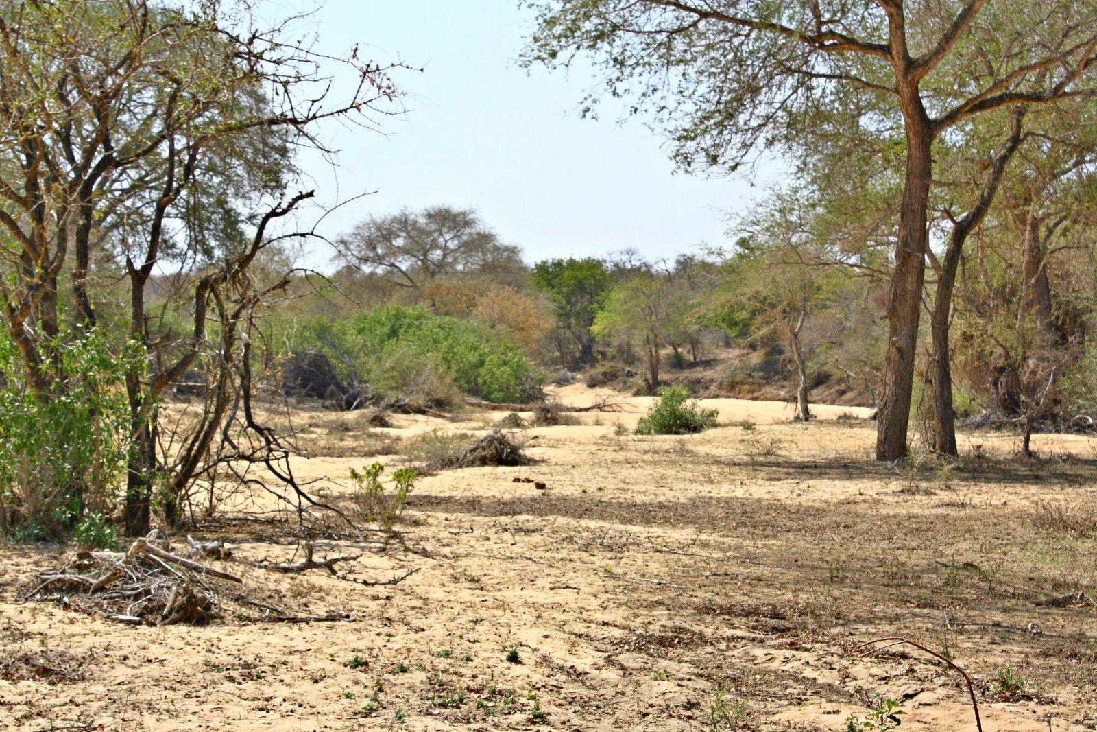 Moditlo Nature Reserve property for sale. Ref No: 2947660. Picture no 6