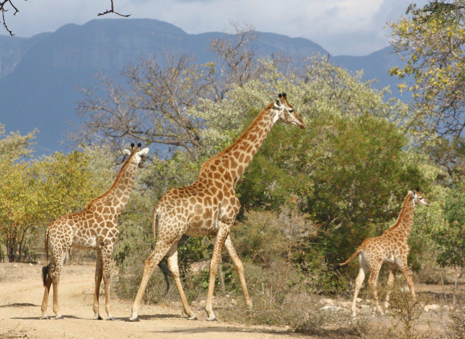 Moditlo Nature Reserve property for sale. Ref No: 2947660. Picture no 8
