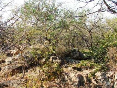 Lissataba Private Nature Reserve property for sale. Ref No: 2934791. Picture no 5