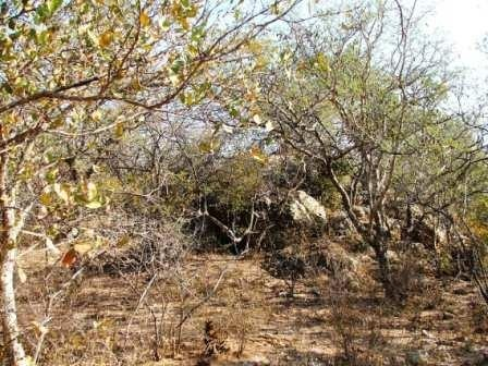 Lissataba Private Nature Reserve property for sale. Ref No: 2934791. Picture no 4