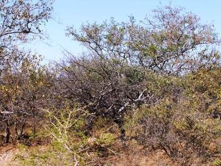 Lissataba Private Nature Reserve property for sale. Ref No: 2934791. Picture no 3