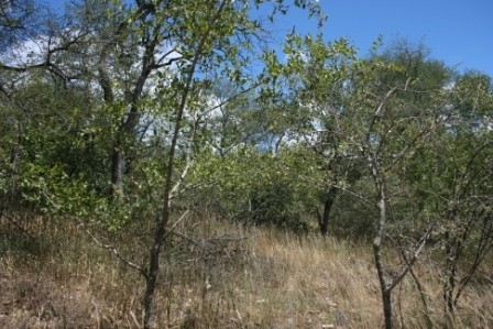 Parsons Game Reserve property for sale. Ref No: 2935231. Picture no 3