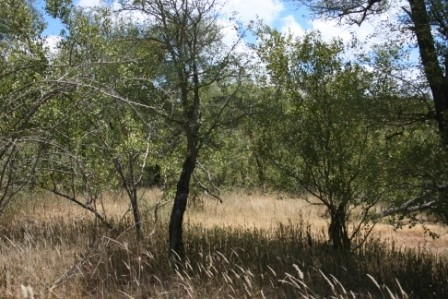 Parsons Game Reserve property for sale. Ref No: 2935231. Picture no 2