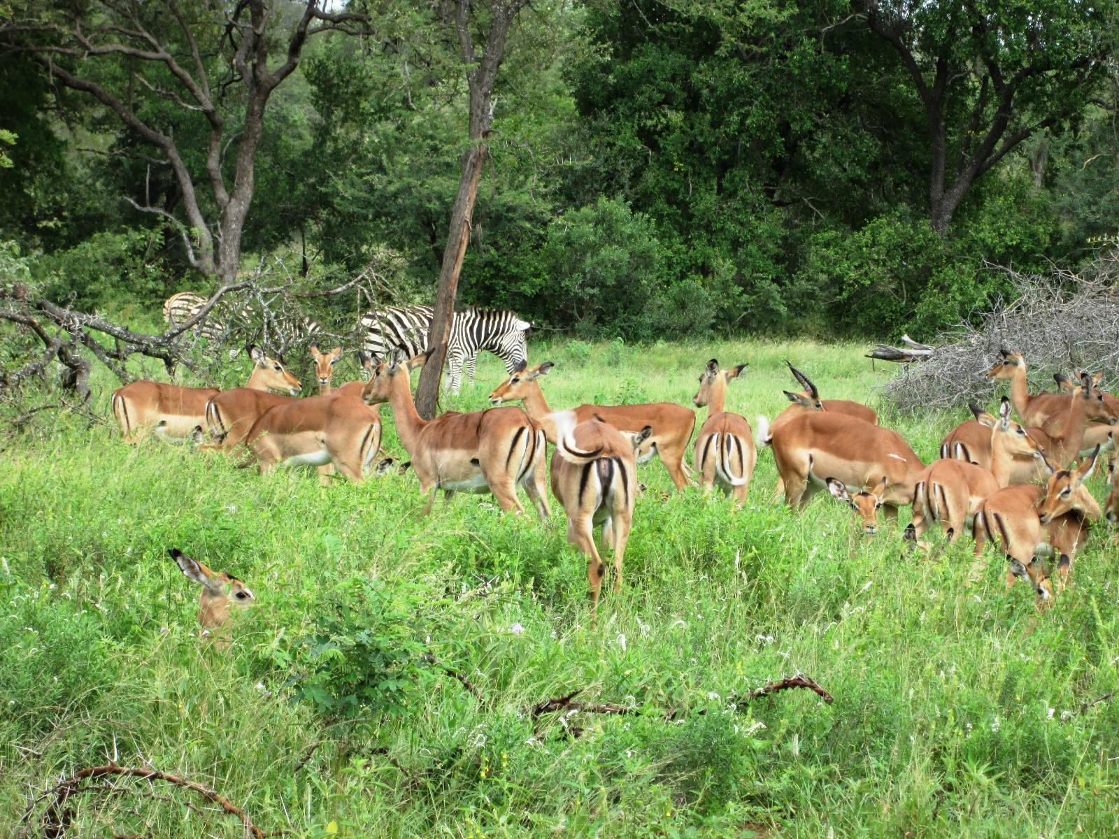 Jejane Private Nature Reserve property for sale. Ref No: 13229717. Picture no 15