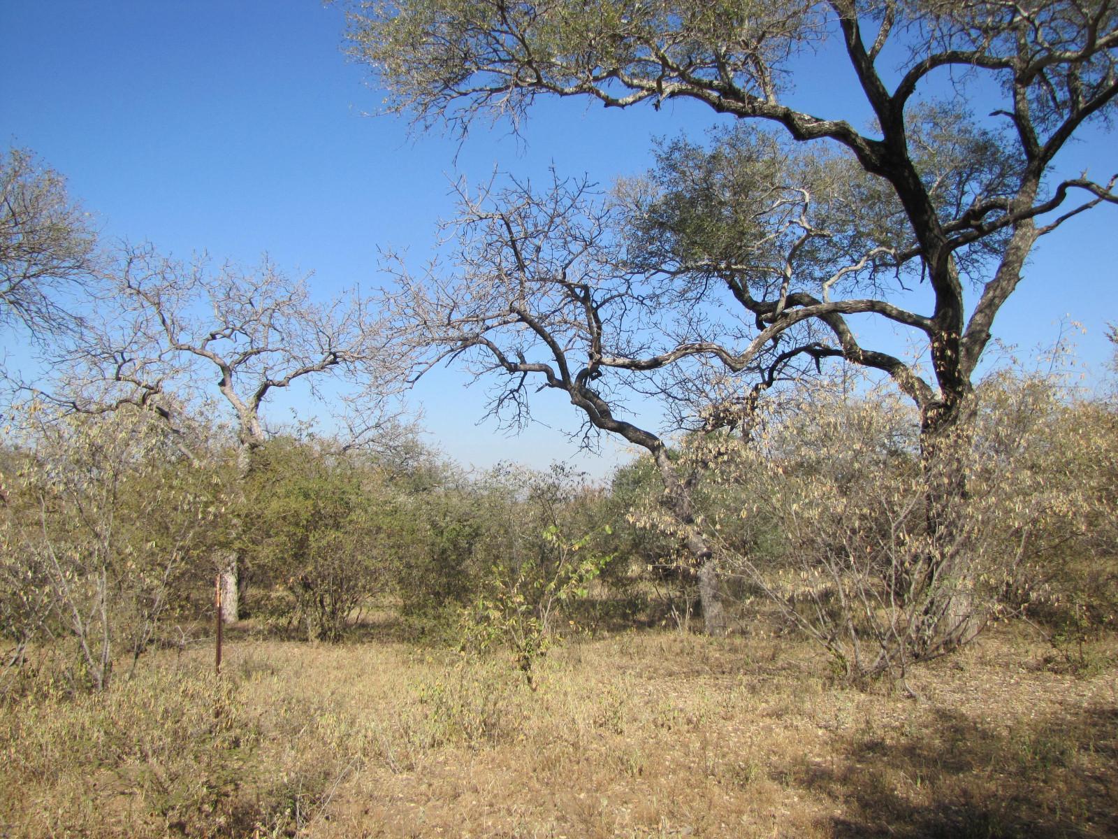 Raptors View Wildlife Estate property for sale. Ref No: 13229714. Picture no 4