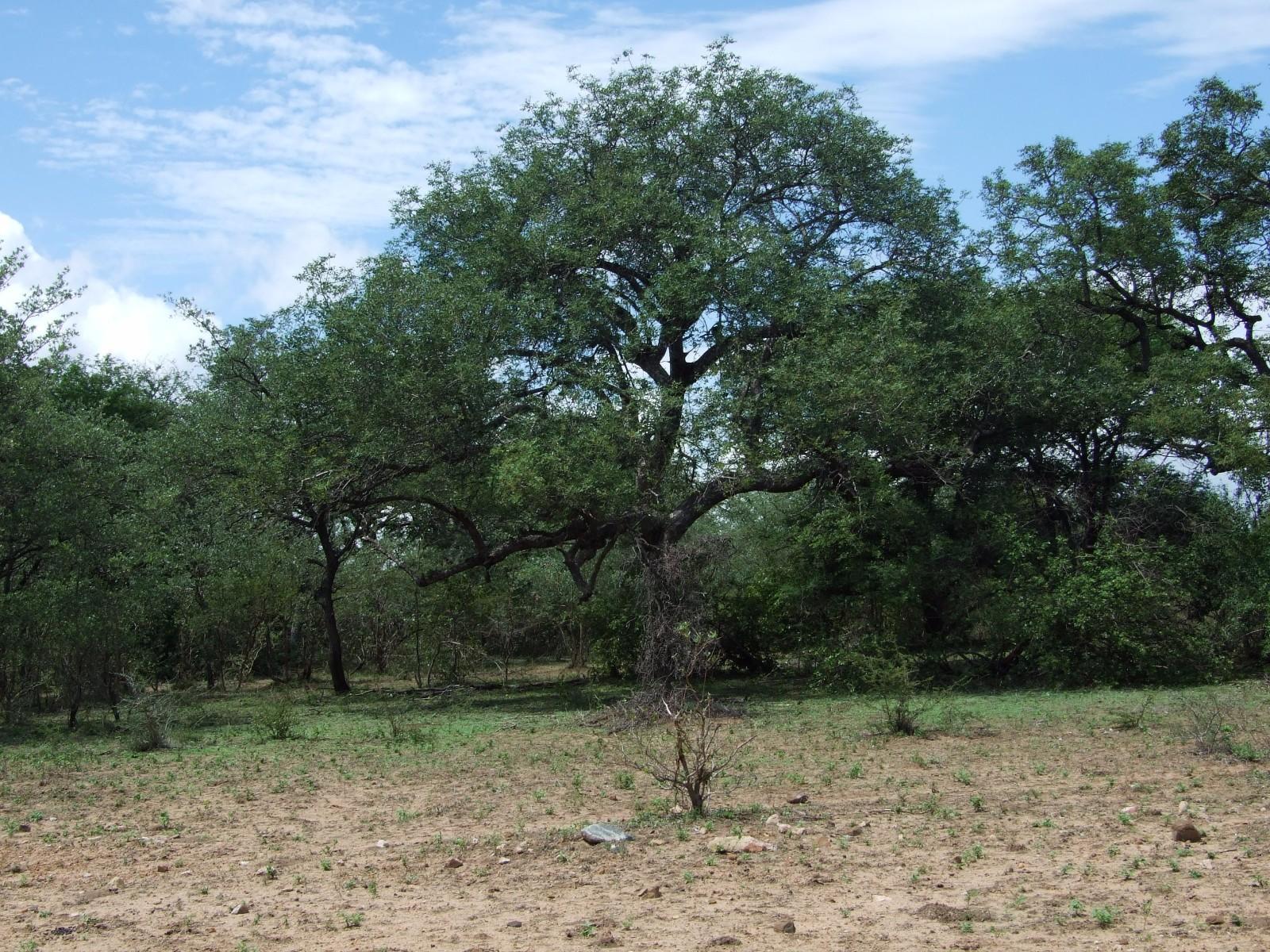 Moditlo Nature Reserve property for sale. Ref No: 13316321. Picture no 2