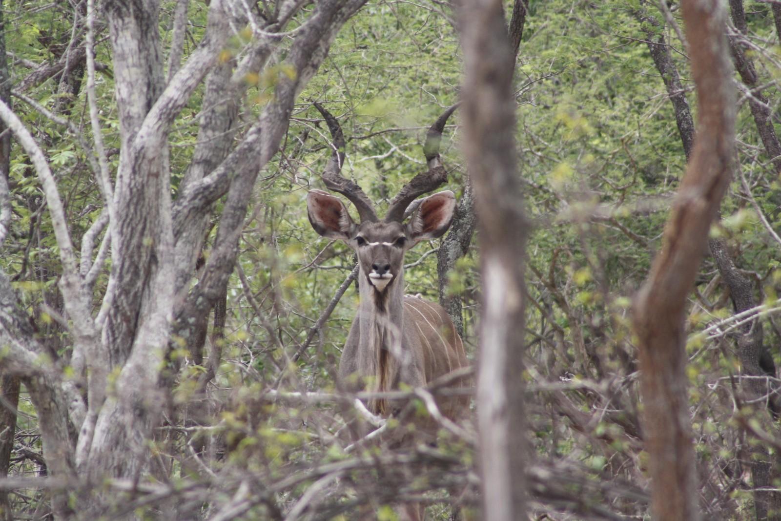 Moditlo Nature Reserve property for sale. Ref No: 13316321. Picture no 4