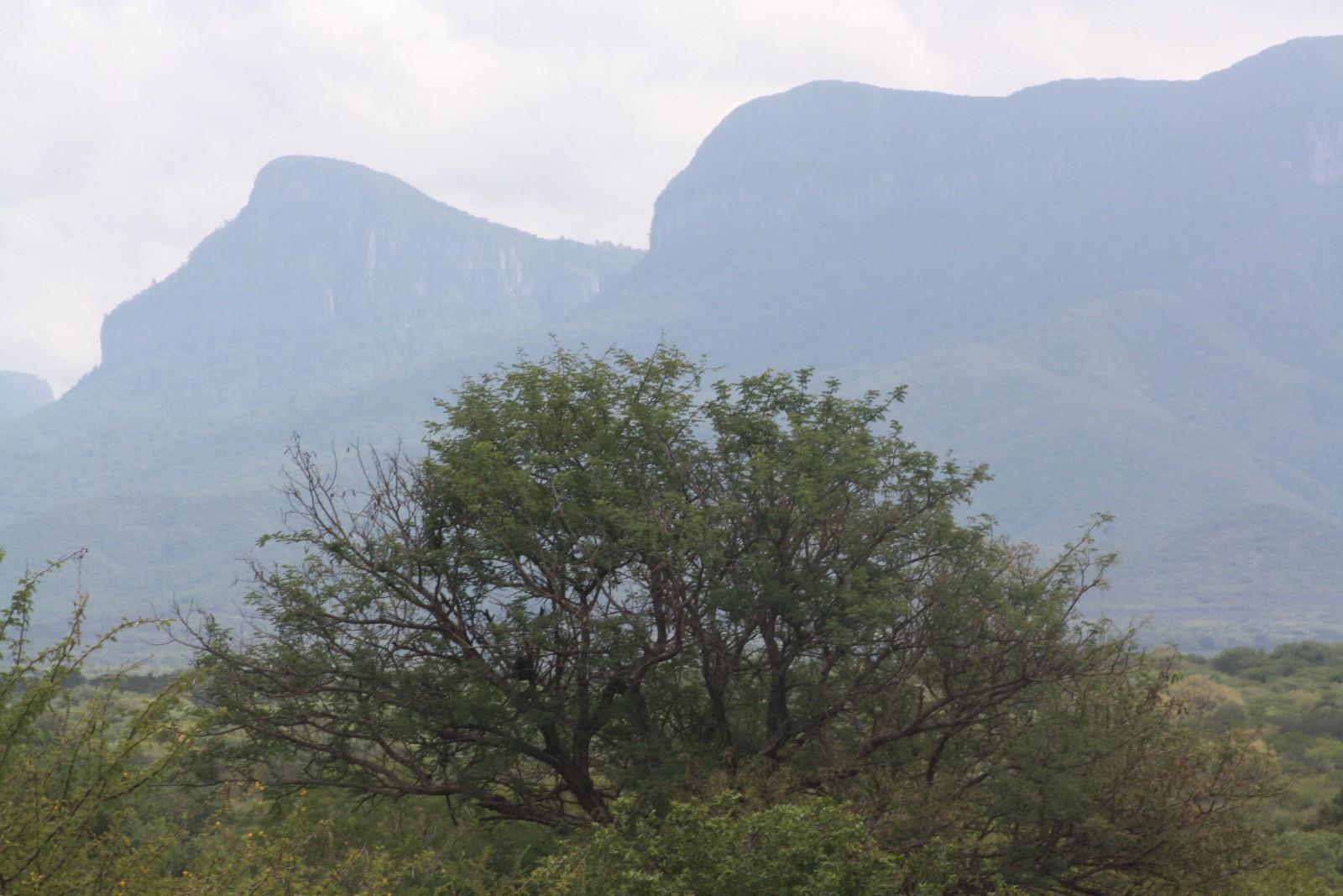 Moditlo Nature Reserve property for sale. Ref No: 13316321. Picture no 1