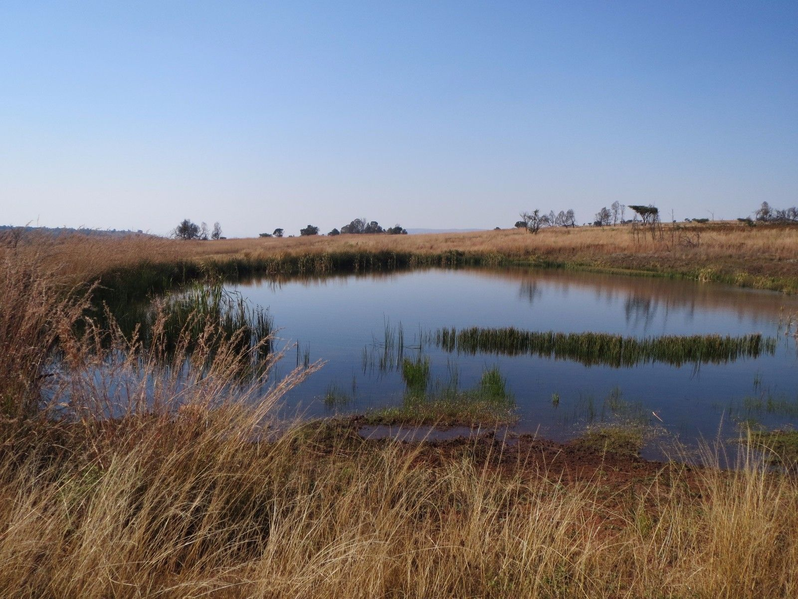 Lydenburg property for sale. Ref No: 13350880. Picture no 14