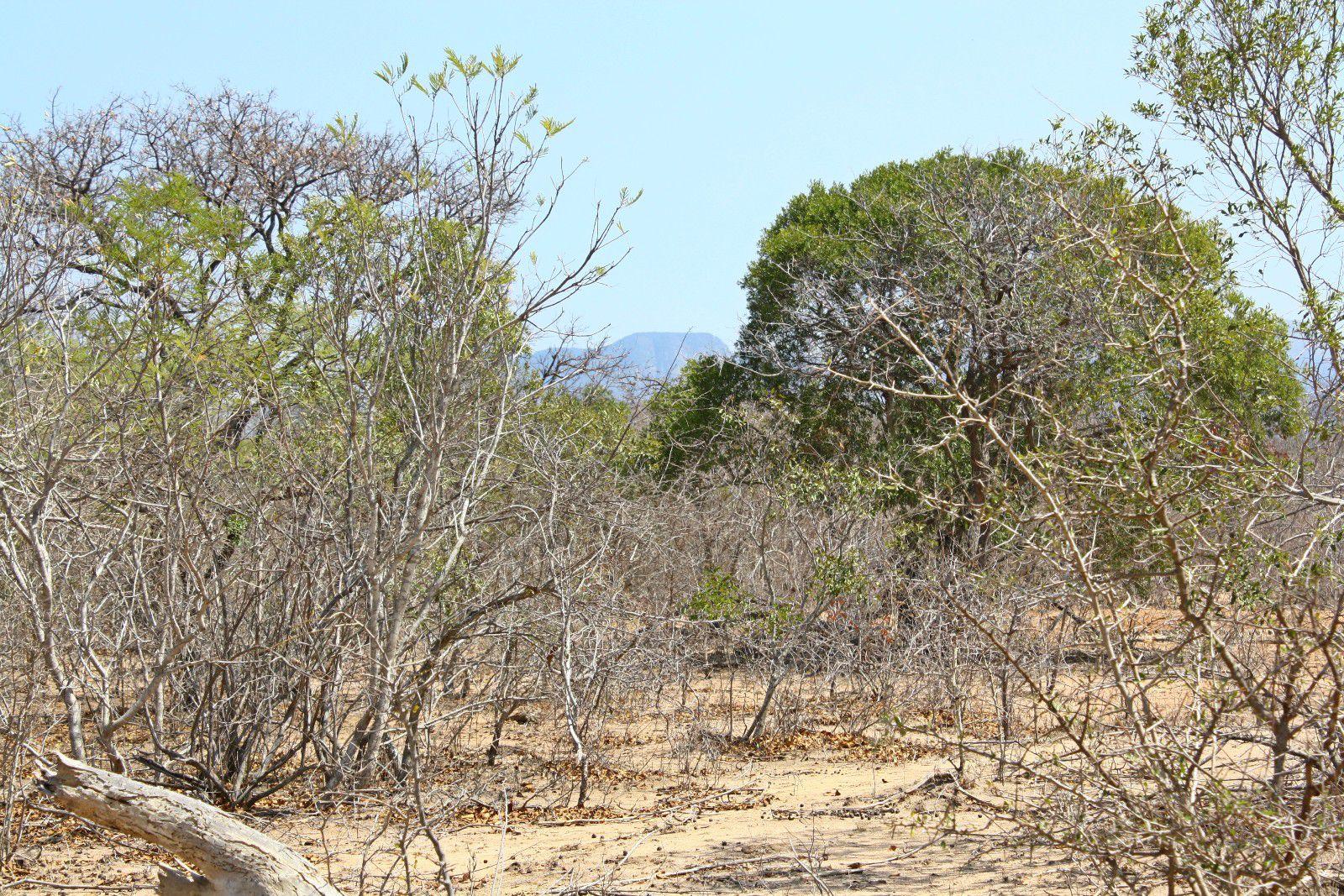 Hoedspruit, Moditlo Nature Reserve Property  | Houses For Sale Moditlo Nature Reserve, MODITLO NATURE RESERVE, Stand  property for sale Price:360,000