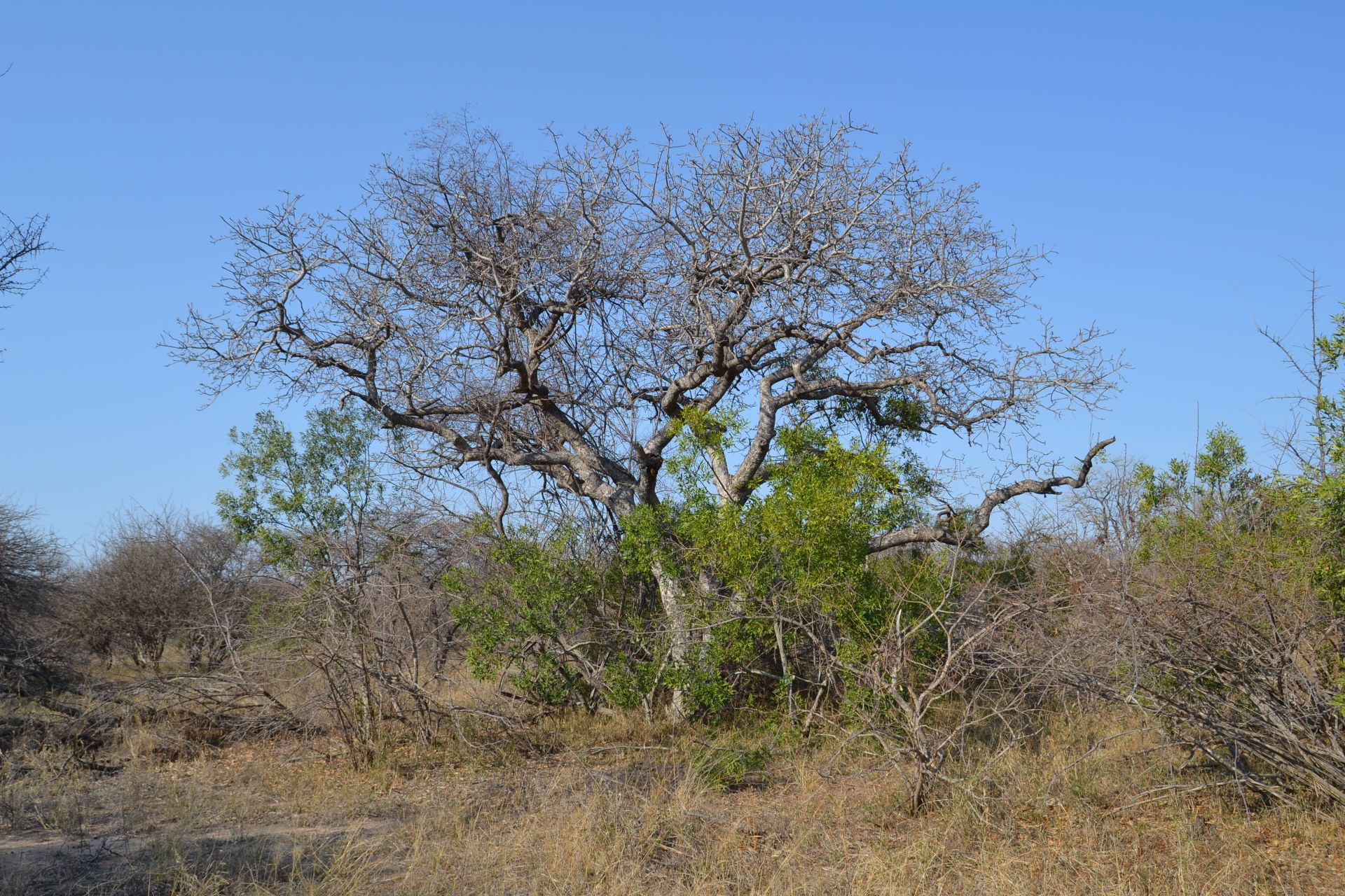 Hoedspruit, Moditlo Nature Reserve Property  | Houses For Sale Moditlo Nature Reserve, MODITLO NATURE RESERVE, Stand  property for sale Price:400,000