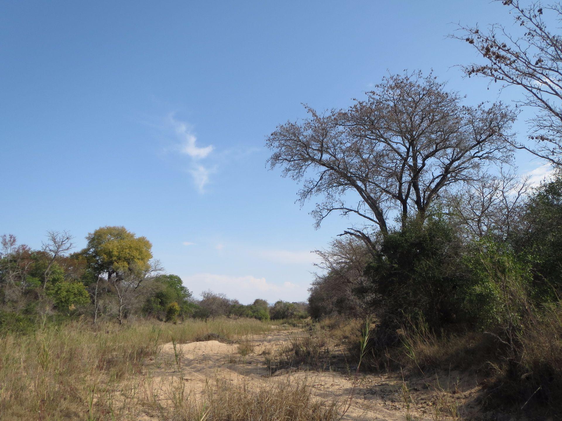 Hoedspruit, Moditlo Nature Reserve Property  | Houses For Sale Moditlo Nature Reserve, MODITLO NATURE RESERVE, Stand  property for sale Price:320,000