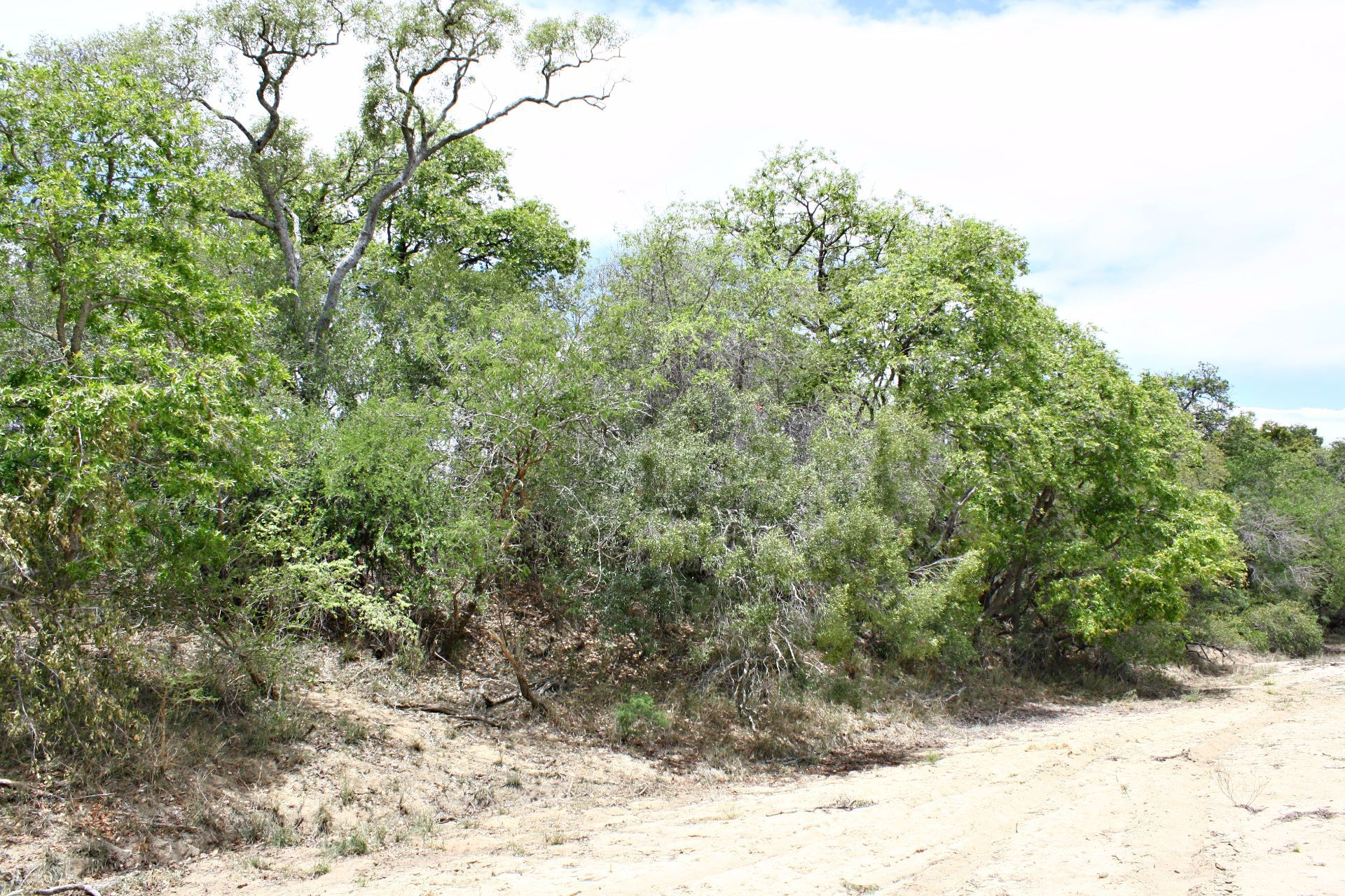 Hoedspruit, Moditlo Nature Reserve Property  | Houses For Sale Moditlo Nature Reserve, MODITLO NATURE RESERVE, Stand  property for sale Price:600,000