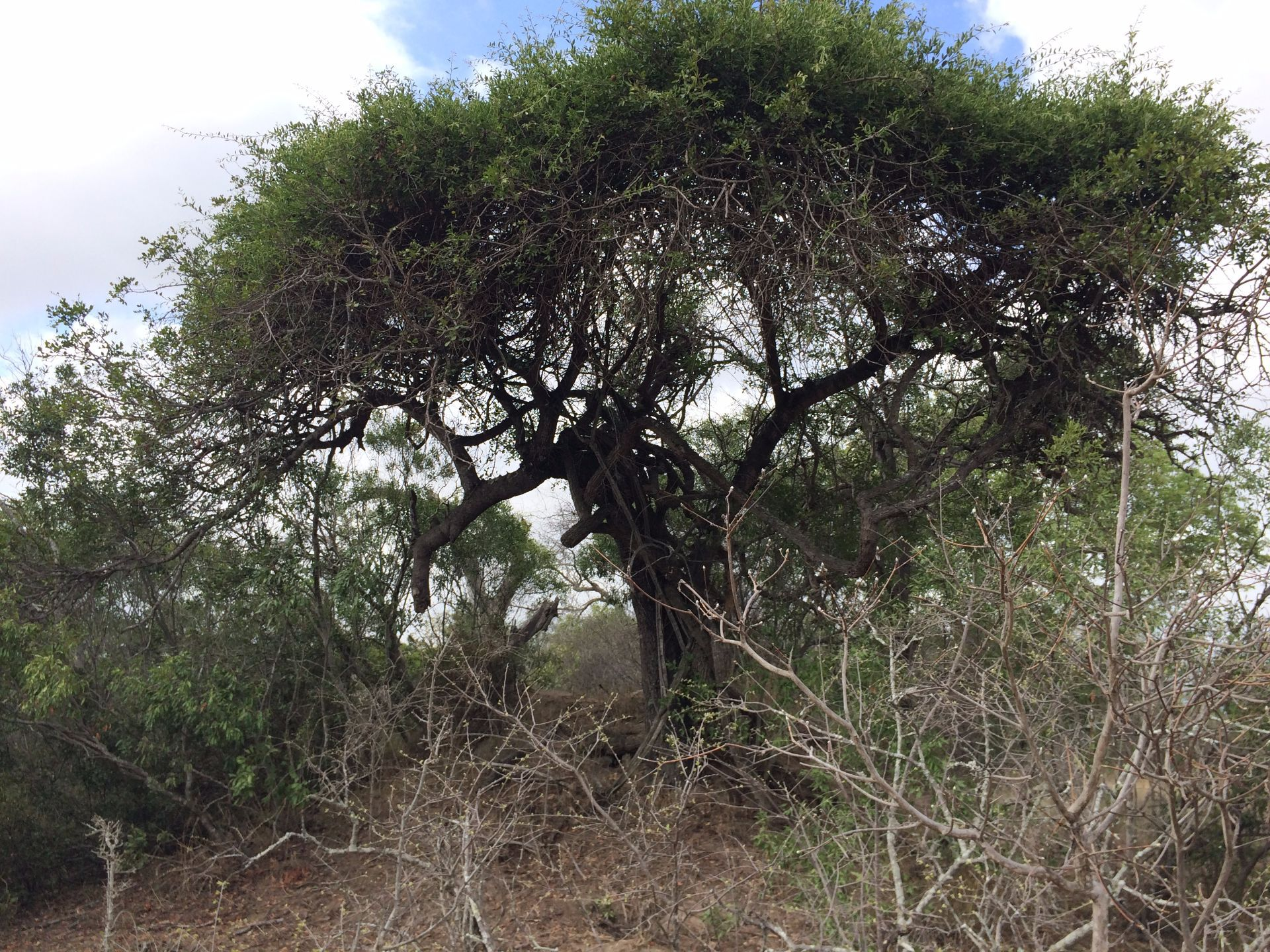 Hoedspruit, Moditlo Nature Reserve Property  | Houses For Sale Moditlo Nature Reserve, MODITLO NATURE RESERVE, Stand  property for sale Price:490,000