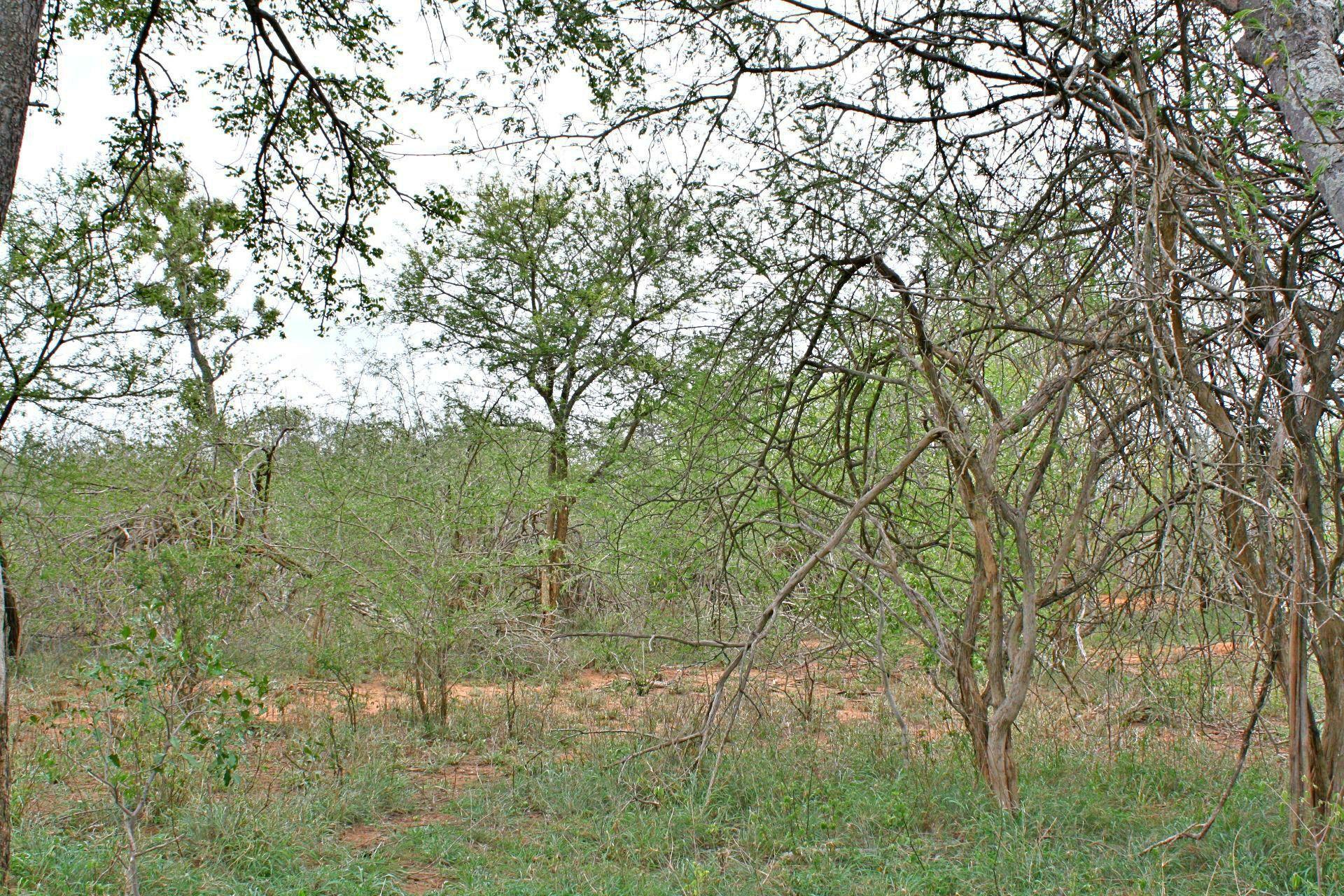 Hoedspruit, Moditlo Nature Reserve Property  | Houses For Sale Moditlo Nature Reserve, MODITLO NATURE RESERVE, Stand  property for sale Price:530,000