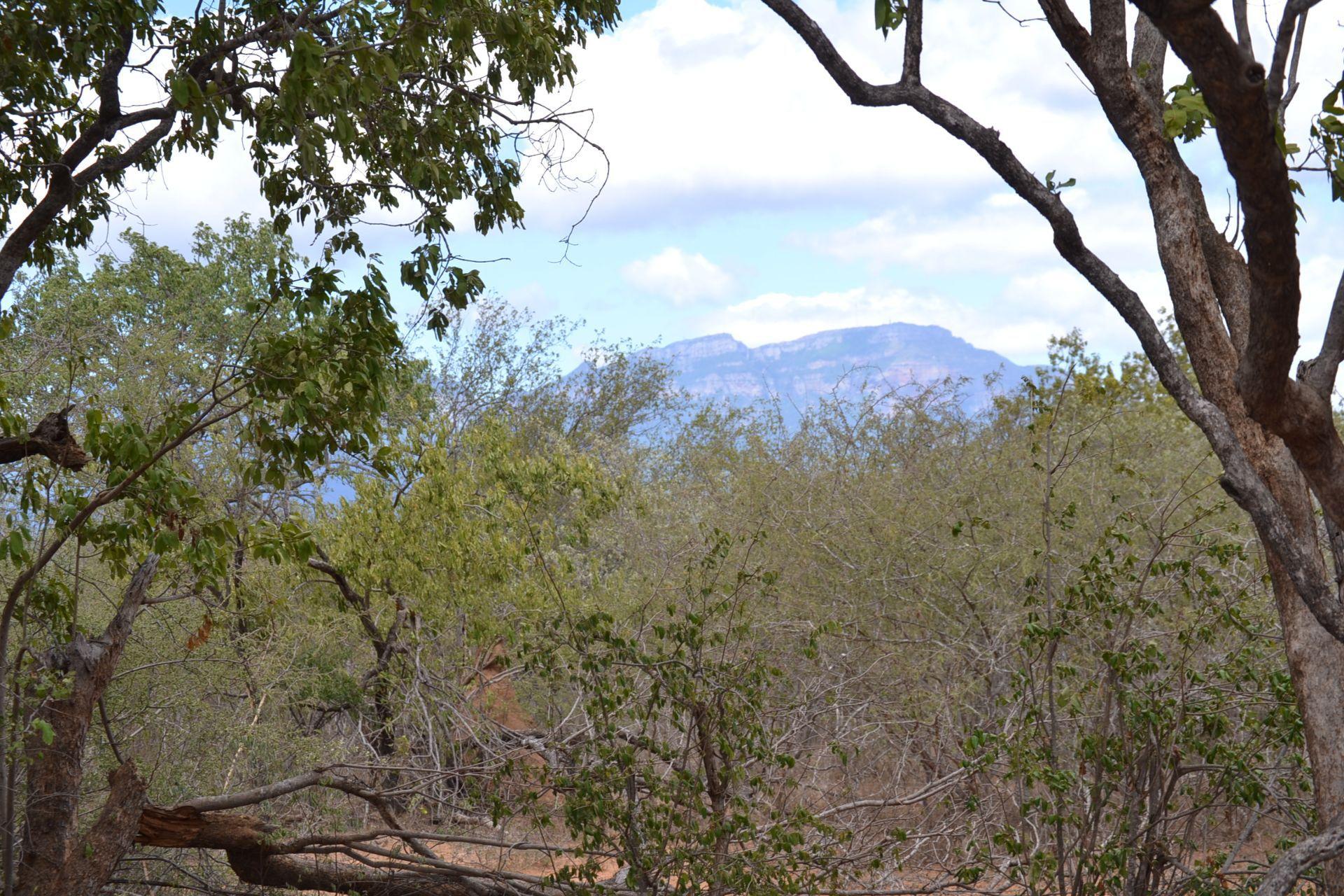 Hoedspruit, Moditlo Nature Reserve Property  | Houses For Sale Moditlo Nature Reserve, MODITLO NATURE RESERVE, Stand  property for sale Price:440,000