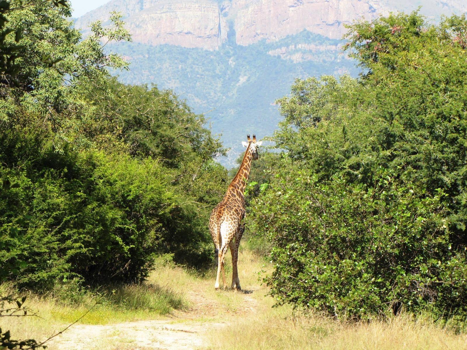 Hoedspruit, Blyde Wildlife Estate Property    Houses For Sale Blyde Wildlife Estate, BLYDE WILDLIFE ESTATE, Stand  property for sale Price:385,000