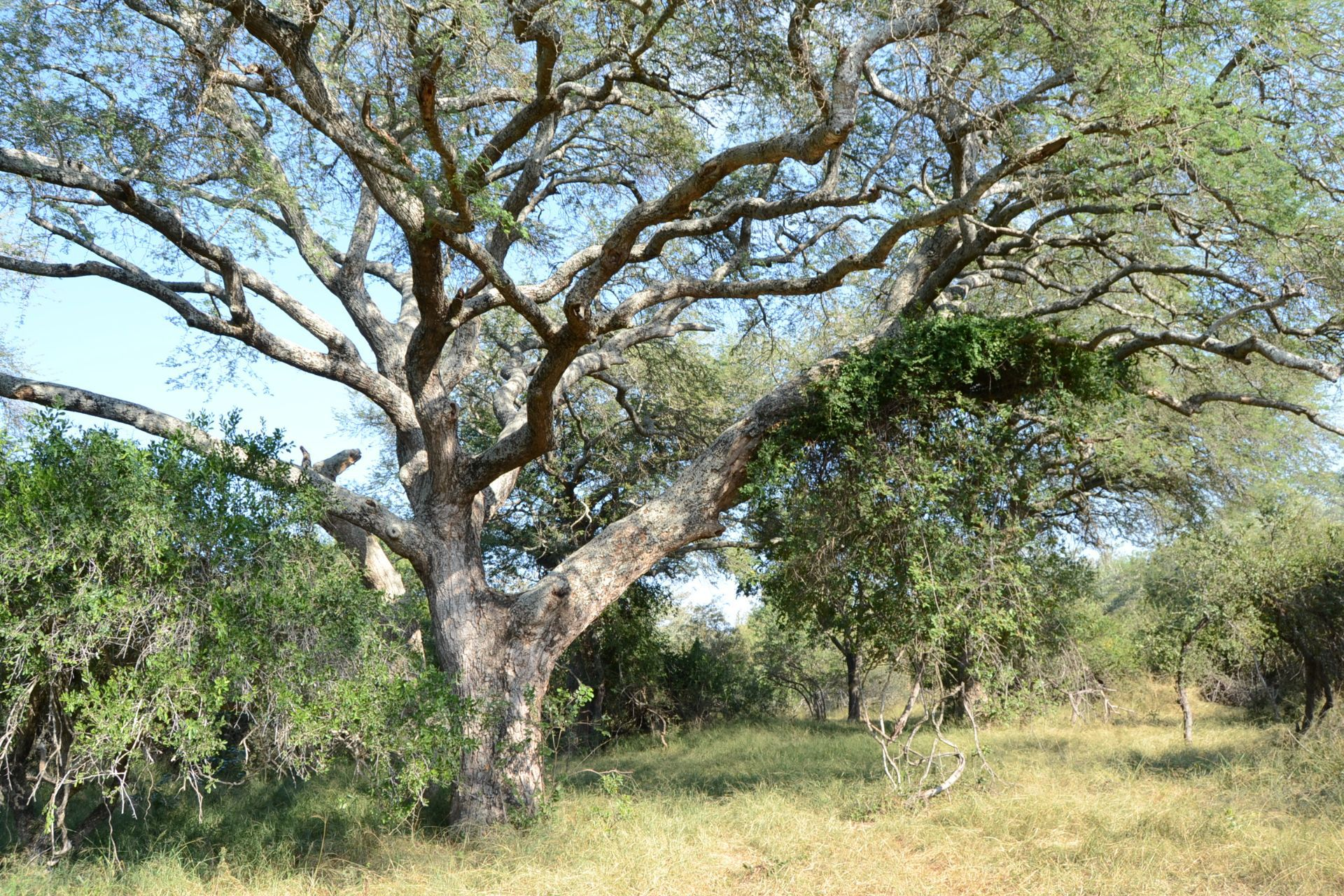 Hoedspruit, Moditlo Nature Reserve Property  | Houses For Sale Moditlo Nature Reserve, MODITLO NATURE RESERVE, Stand  property for sale Price:650,000