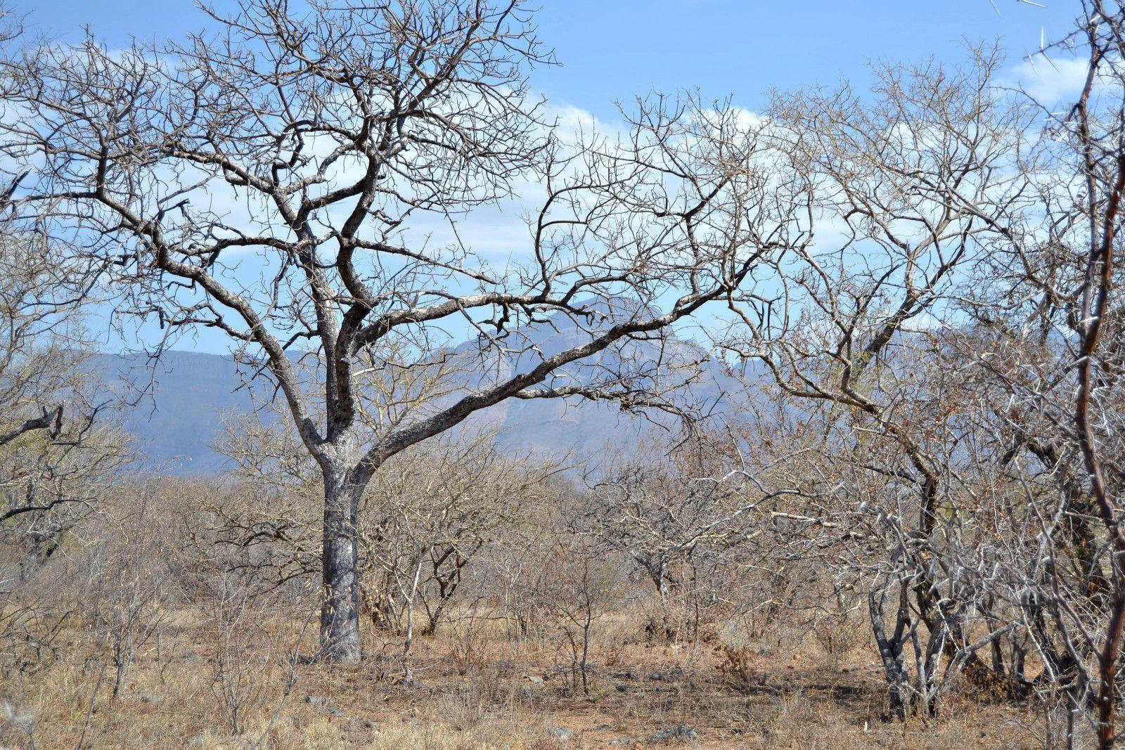 Hoedspruit, Blyde Wildlife Estate Property  | Houses For Sale Blyde Wildlife Estate, BLYDE WILDLIFE ESTATE, Stand  property for sale Price:400,000
