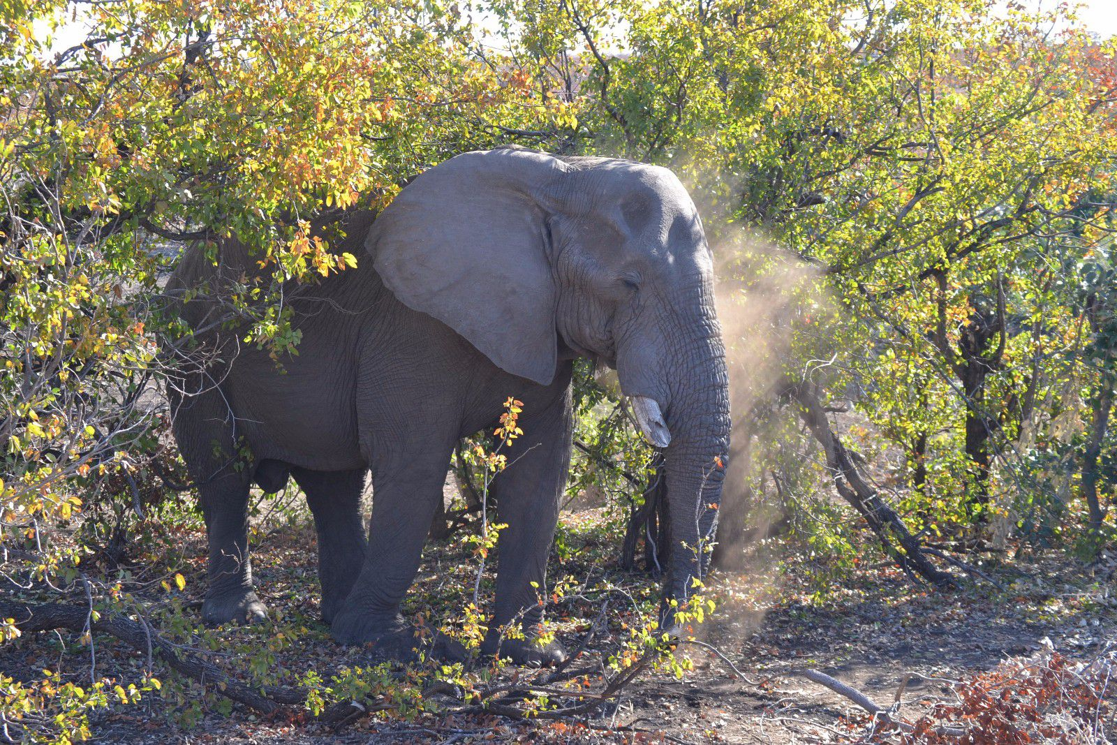 Hoedspruit, Grietjie Private Nature Reserve Property    Houses For Sale Grietjie Private Nature Reserve, GRIETJIE PRIVATE NATURE RESERVE, Lodge  property for sale Price:2,000,000
