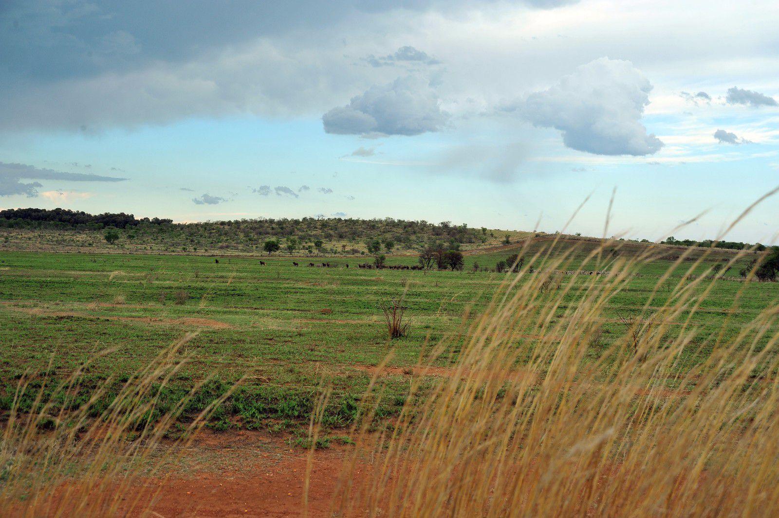 Potchefstroom, Lekwena Wildlife Estate Property  | Houses For Sale Lekwena Wildlife Estate, LEKWENA WILDLIFE ESTATE, Stand  property for sale Price:1,342,656