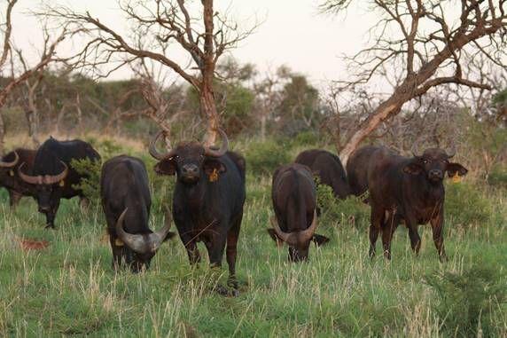 Potchefstroom, Lekwena Wildlife Estate Property  | Houses For Sale Lekwena Wildlife Estate, LEKWENA WILDLIFE ESTATE, Stand  property for sale Price:790,000