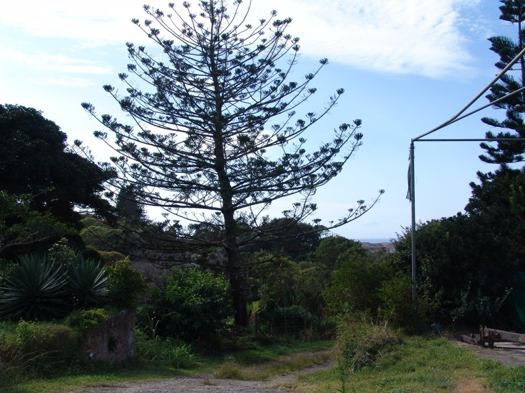 Shelly Beach property for sale. Ref No: 2903627. Picture no 5