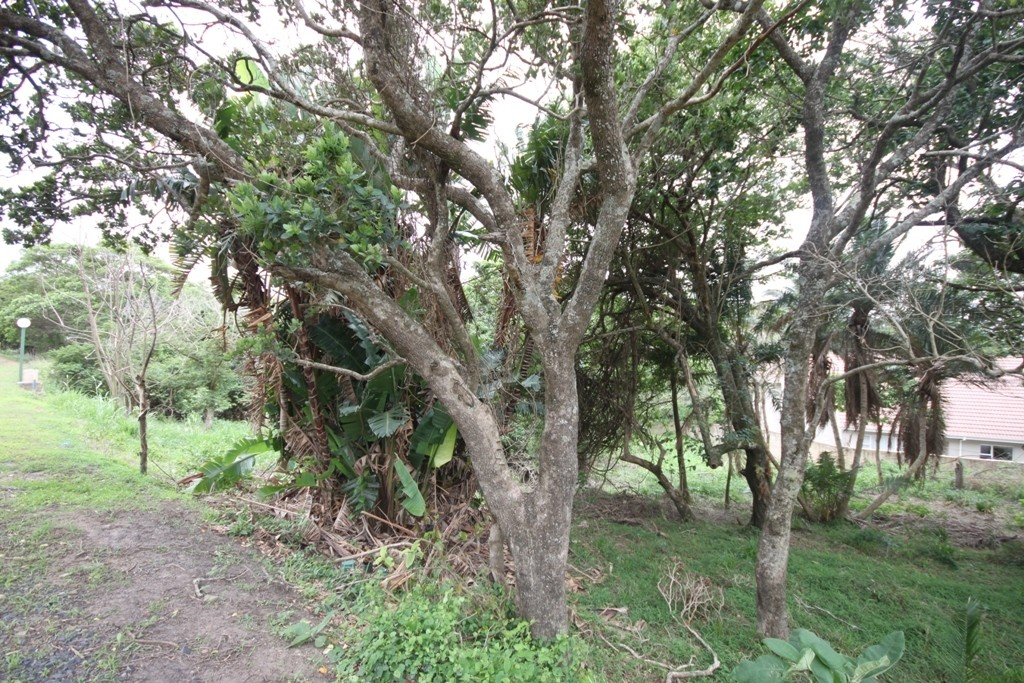 Shelly Beach property for sale. Ref No: 2908572. Picture no 2