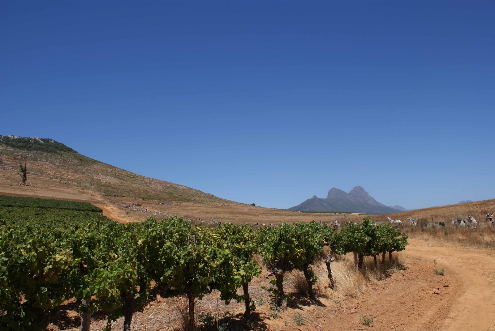 Property and Houses for sale in Stellenbosch Farms, Farms - ZAR 10,750,000