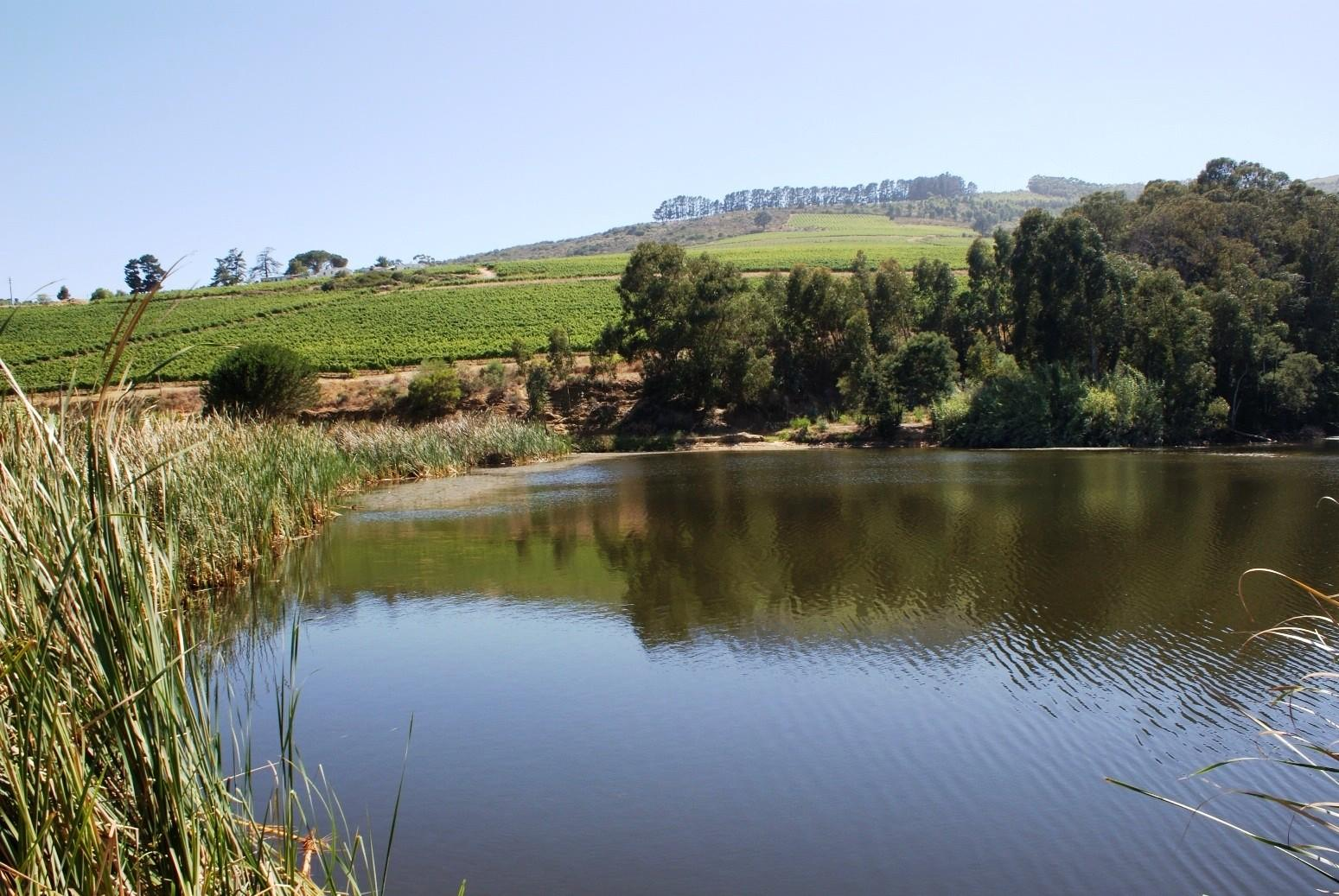 Stellenbosch property for sale. Ref No: 13309249. Picture no 9