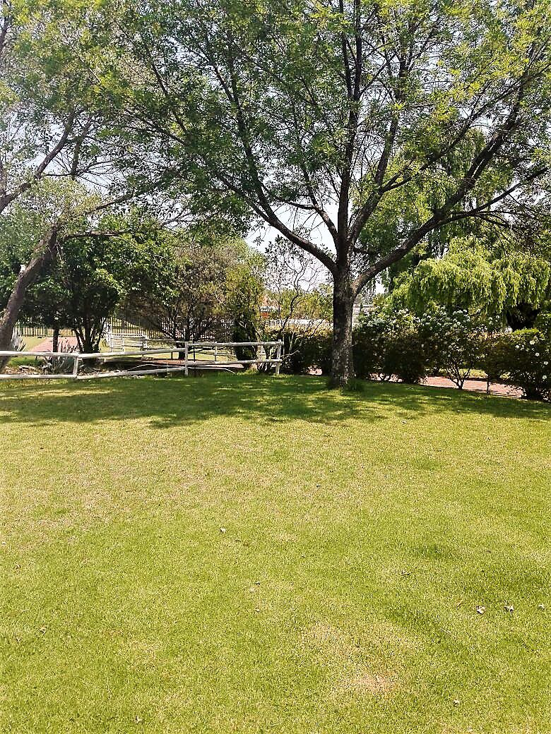 36 Pitzer Rd, Glen Austin, Midrand -  garden.jpg