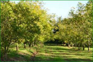 PLANTATIONLEVERGERCapture.PNG